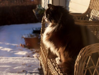 Katt som sitter ute om vinteren