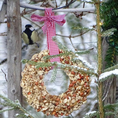 Fugl og meisebolle i snø