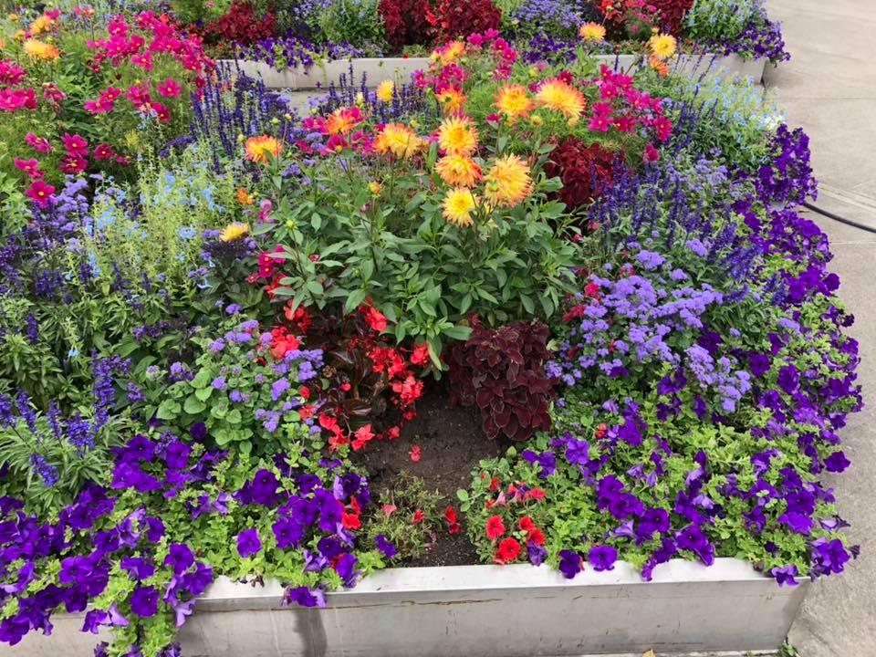 Blomster i blomsterkasse