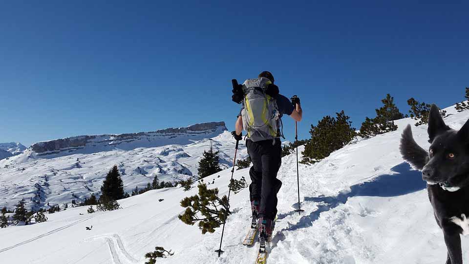 Skiløper med hund plassert inn i bildet