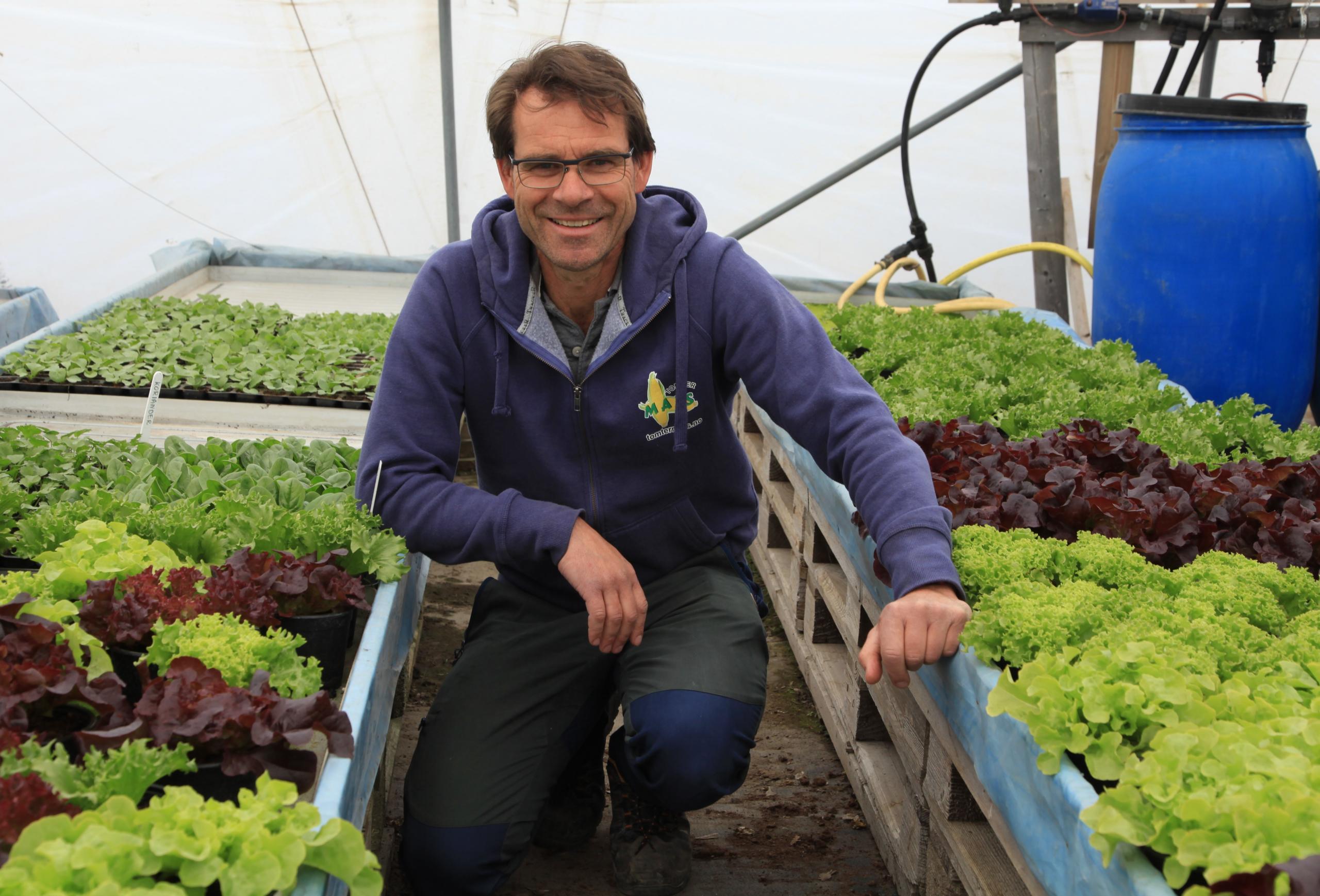 Mann på huk sammen medsalatplanter