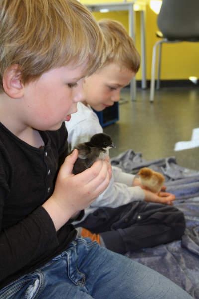 To barn og kyllinger en gul og en sort.