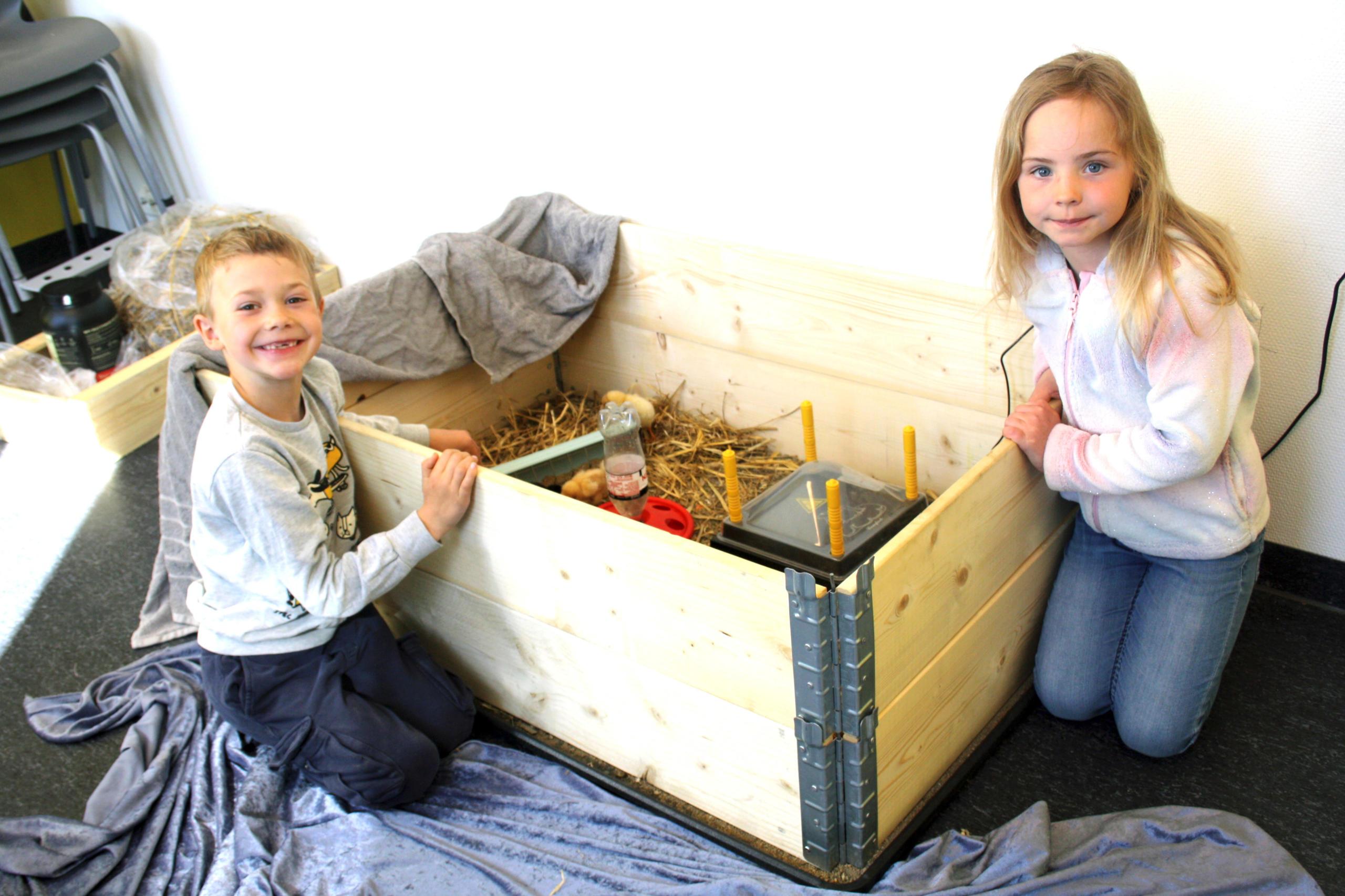 To barn ved en pallekarm der det er kyllinger