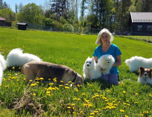 En plass i solen– for «Solplassens» eldre og eierløse hunder